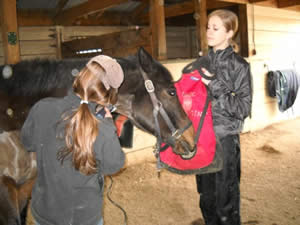 One great way to sedate a horse: Use a bag full of grasss hay. - MyHoofprints