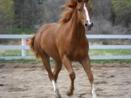 Hobbes_Poudre_River_Stables_Arena