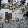 Snowstorm_Oct_25_2011_poudre_river_stables 168