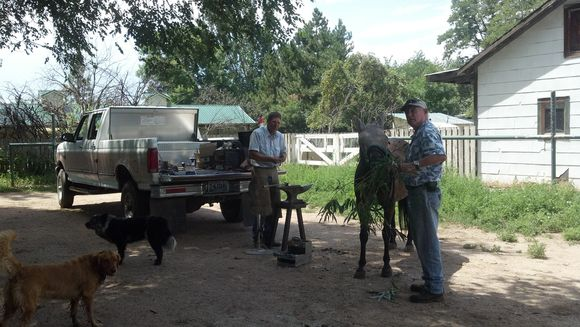 Bonnie munches pain-controlling willow fed by Gregg, as farrier Tom Presgrove forms her new set of shoes.