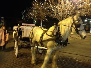 A carriage horse stands ready to make the holidays memorable - Old Town - Fort Collins - Colorado - Photo by Lois Carroll