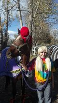 Billy Blue the Horse - Halloween 2012 - Poudre River Stables - Fort Collins - Colorado - 80521