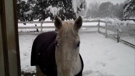 """PB"" wears blanket that survived - Poudre River Stables - Fort Collins - Colorado - 80521"