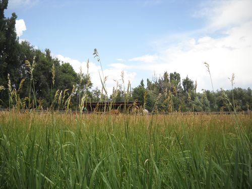 Good grass - turnout - Poudre River Stables - Fort Collins - Colorado - 80521