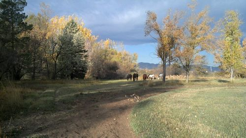 Horses grazing - Poudre River Stables - Fort Collins - Colorado - 80521