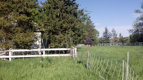 Front pasture - deer fence protects apple trees while a horse grazes - Poudre River Stables - Fort Collins - Colorado - 80521