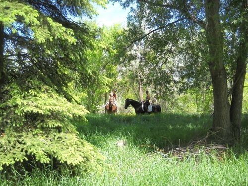 Shady lane riding - Poudre River Stables - Fort Collins - Colorado - 80521