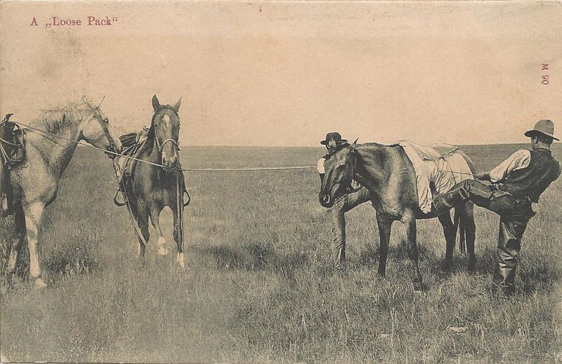 Historic horses0007