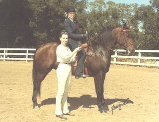 Imp, a registered Morgan, wins a high-point at a local show in California, approximately age four.