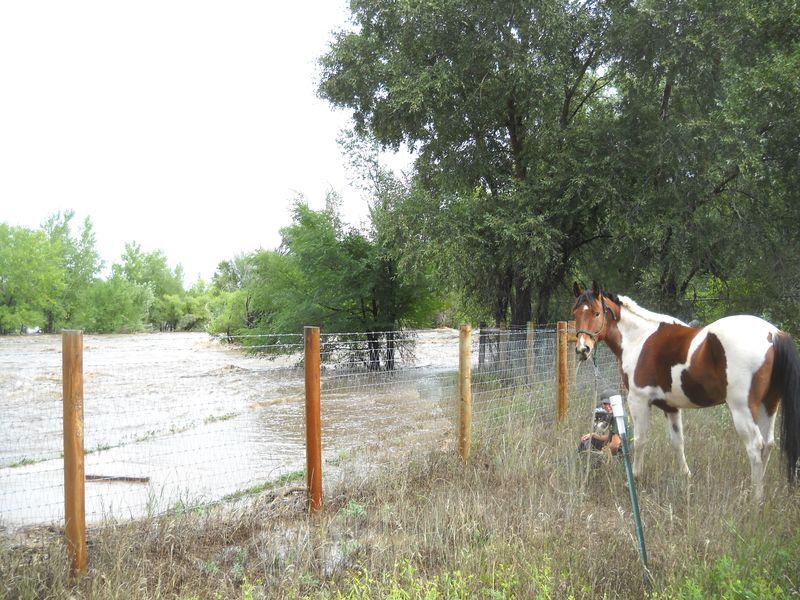 Poudre river flood (42)