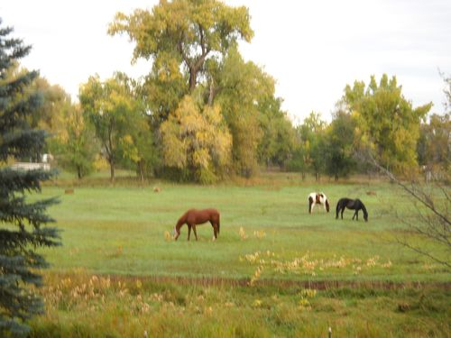 Fall pasture - Poudre River Stables - horse boarding - historic farm - Fort Collins - Colorado - 80521