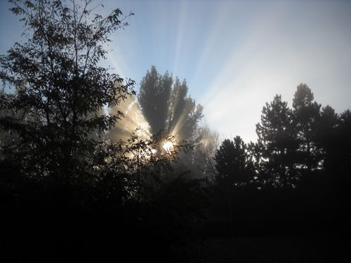 Fog lifts, and sun rises through the trees - Poudre River Stables - historic farm - Fort Collins - Colorado - 80521