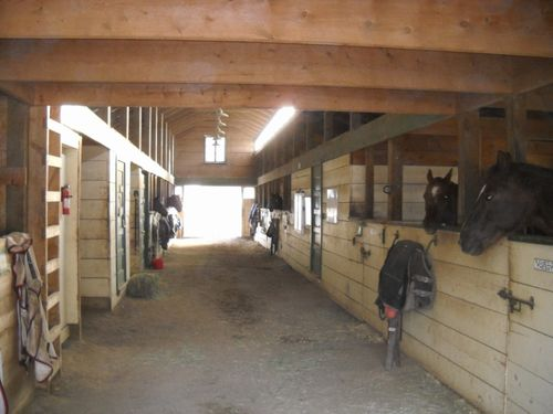 """Hey, where's breakfast!"" - horses in the barn - Poudre River Stables - historic farm - Fort Collins - Colorado - 80521"