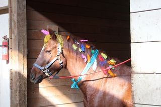 Rainbow of feathers - Halloween - Poudre River Stables - Fort Collins - Colorado - 80521