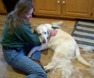 Buck the official ranch dog gets a good grooming with the FURminator. (Click on the photo to enlarge.)