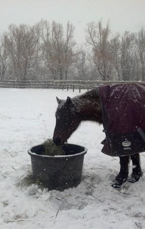 Bonnie in snow 4x6