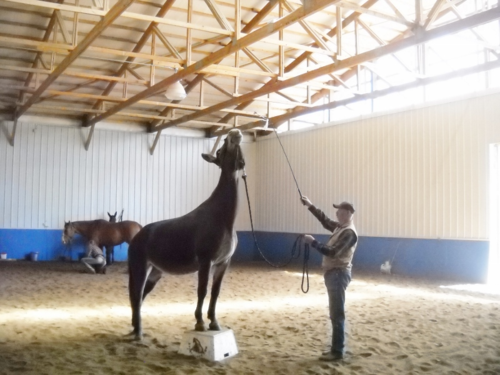 Jackie Johnson Horse Trick Training Clinic - Day 2 - Last Resort Equestrian Center - Fort Collins - Colorado