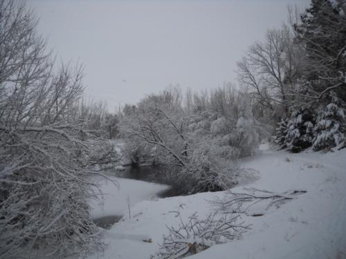 Pond system - Poudre River Stables - Fort Collins - Colorado - 80521