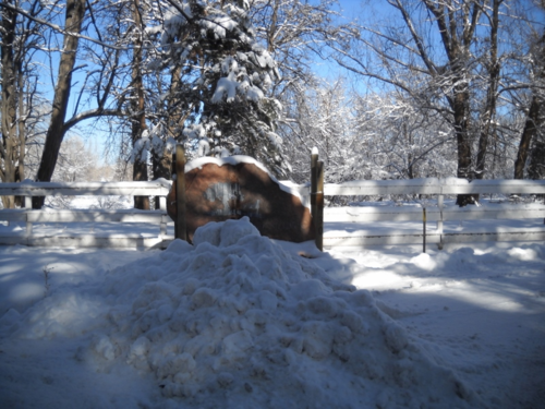 Sign in snow - Poudre River Stables - Fort Collins - Colorado -