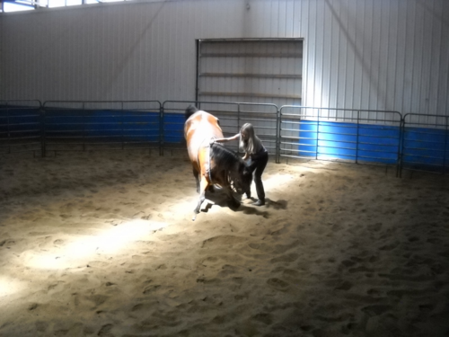 Jackie Johnson Horse Trick Training Clinic Day 2 - Fort Collins - Colorado - 80521