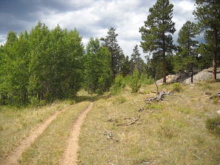 "The ""main drag"" on the Molly Lake trail ride features a lot of old logging road, double-wide accessibility."