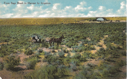 Sagebrush to irrigation - horses - buggy - Colorado irrigation history - circa 1872 - postcard calls for 1 cent postage