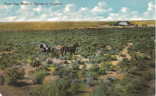 Sagebrush to irrigation - horses - buggy - Colorado irrigation history - circa 1872 - postcard calls for 1 cent postage
