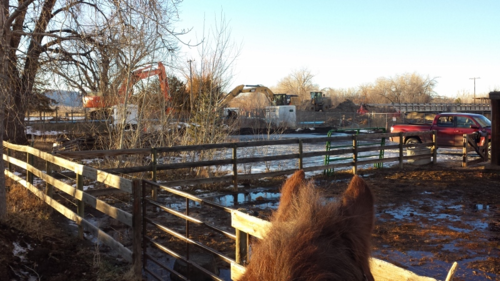 Dell the horse watches N. Shields construction - riverside pens - Poudre River Stables - Fort Collins - Colorado - 80521