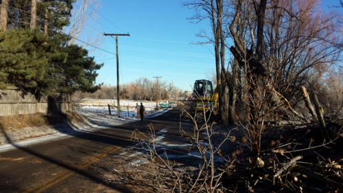 Trees being cut down - N. Shields St. - Fort Collins - Colorado - 80521
