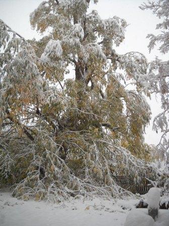Snowstorm_Oct_25_2011_poudre_river_stables 154