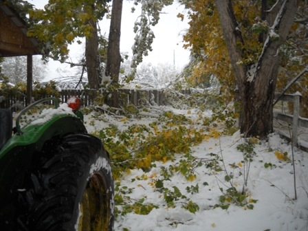 Snowstorm_Oct_25_2011_poudre_river_stables 165