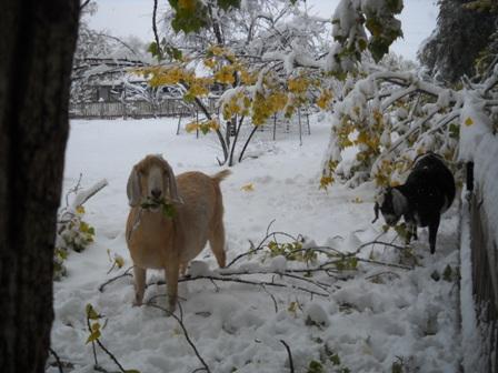 Snowstorm_Oct_25_2011_poudre_river_stables 168