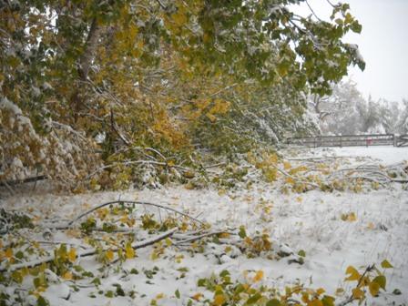 Snowstorm_Oct_25_2011_poudre_river_stables 169