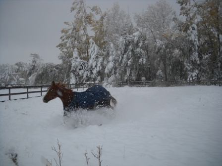Snowstorm_Oct_25_2011_poudre_river_stables 176