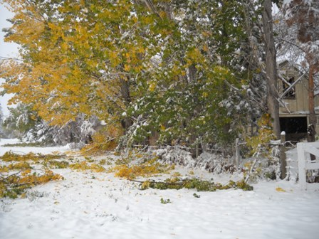 Snowstorm_Oct_25_2011_poudre_river_stables 179