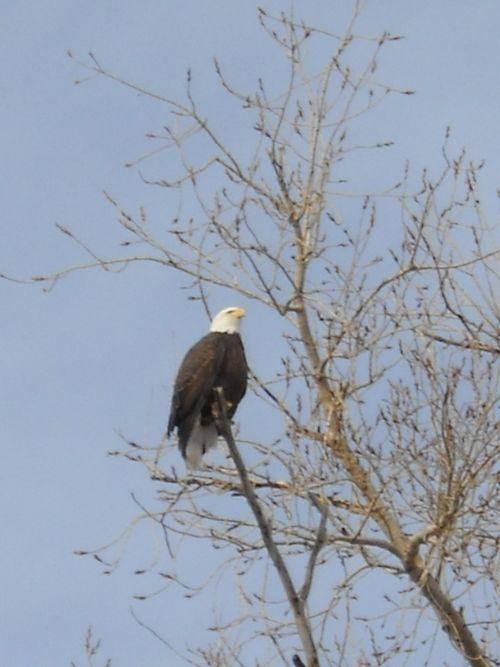Eagle above the kitchen closeup